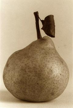 photo michel ducruet, poire, pear